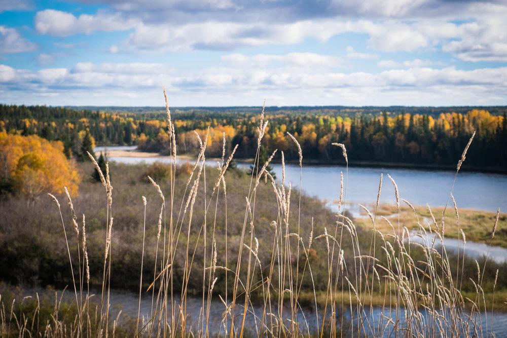 Fish habitat, water and sediment, wildlife surveys