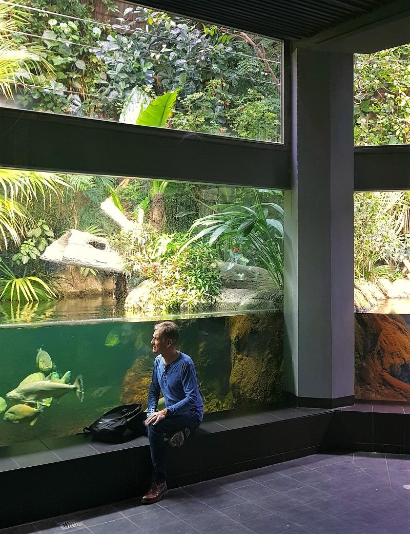 Panoramabecken Aquarium Berlin.jpg