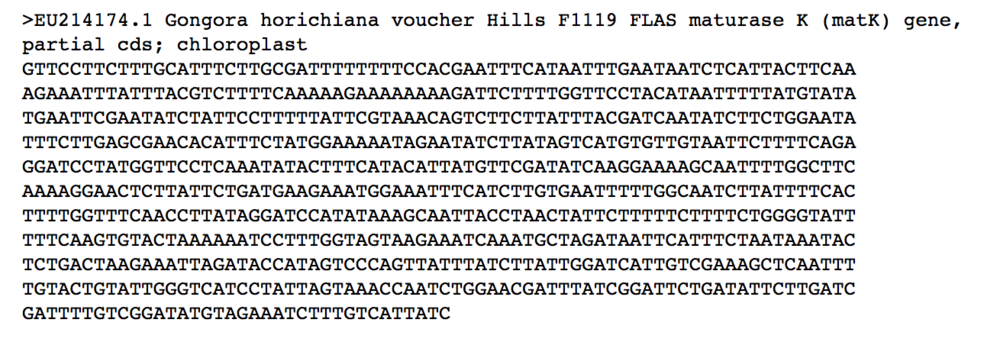 Fasta format of nucleotide sequence downloaded from NCBI's GenBank.