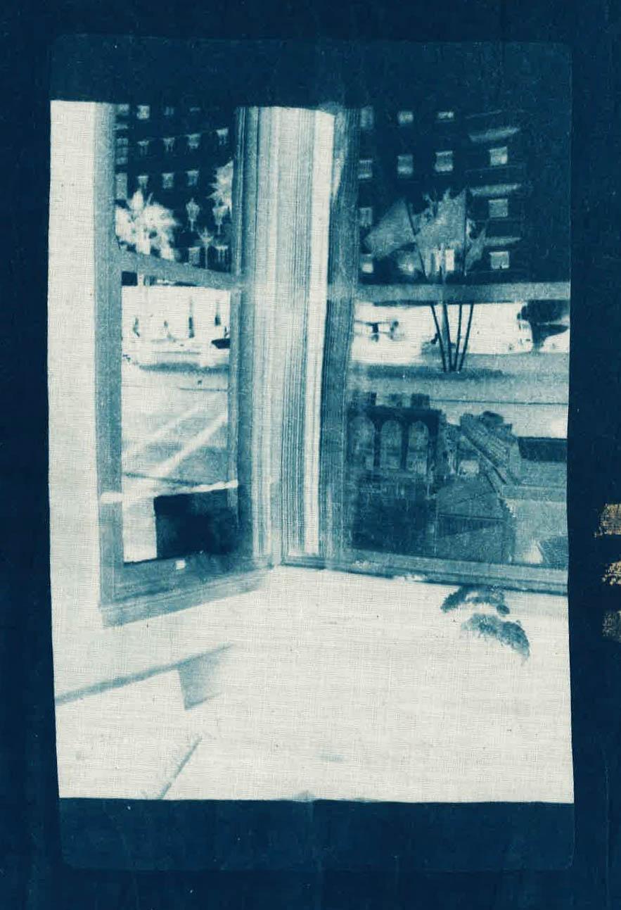 sage_casachi_cyanotype_scan-1.jpg