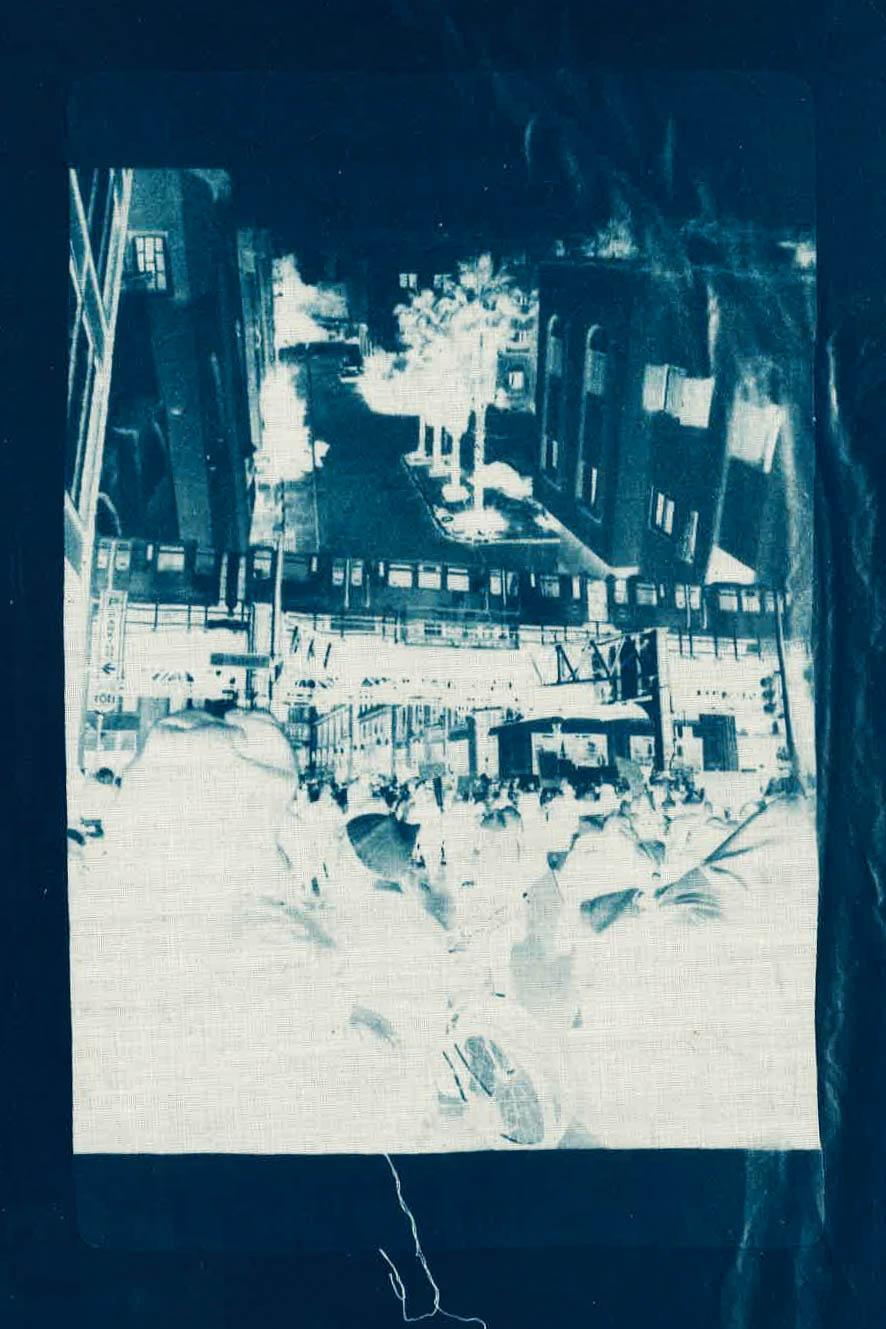 sage_casachi_cyanotype_scan-5.jpg