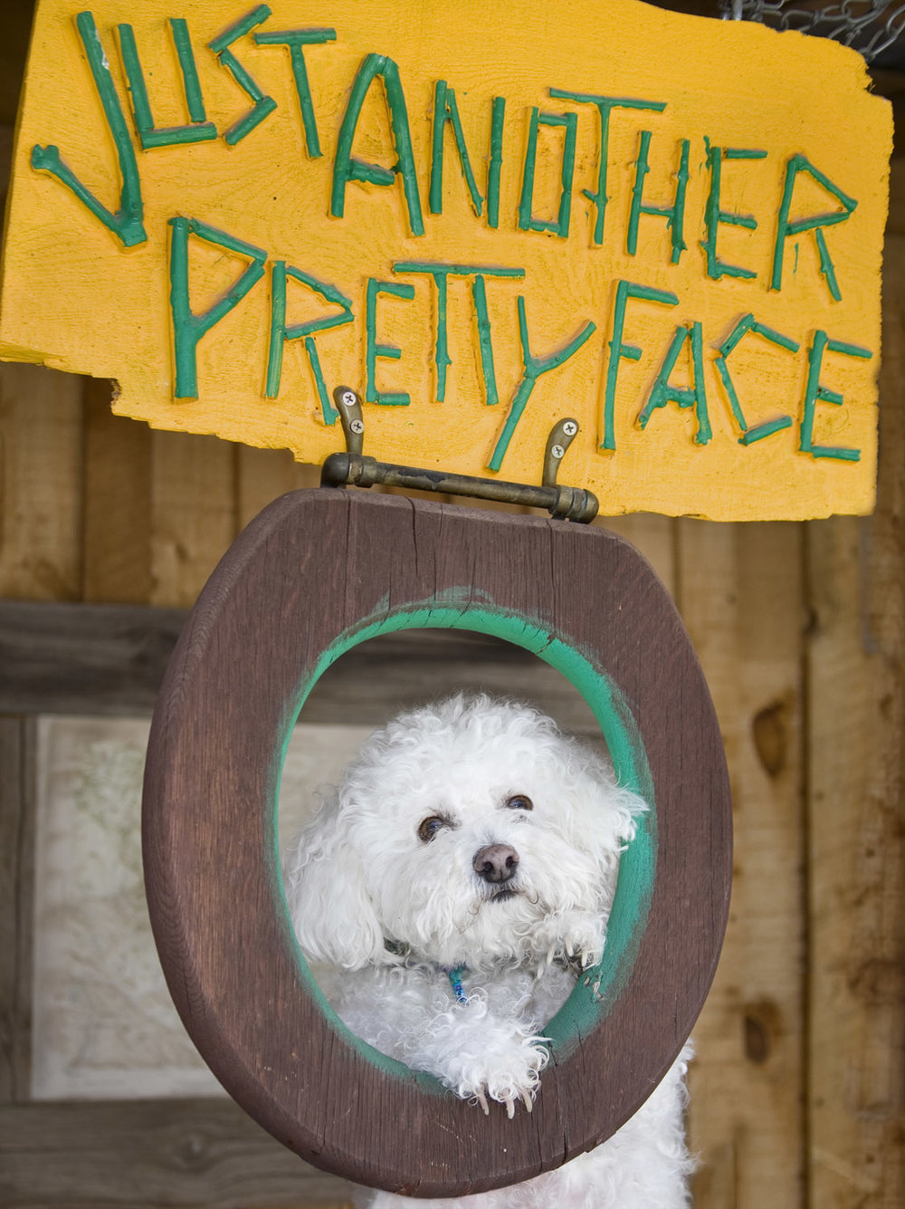 dogprettyface.jpg