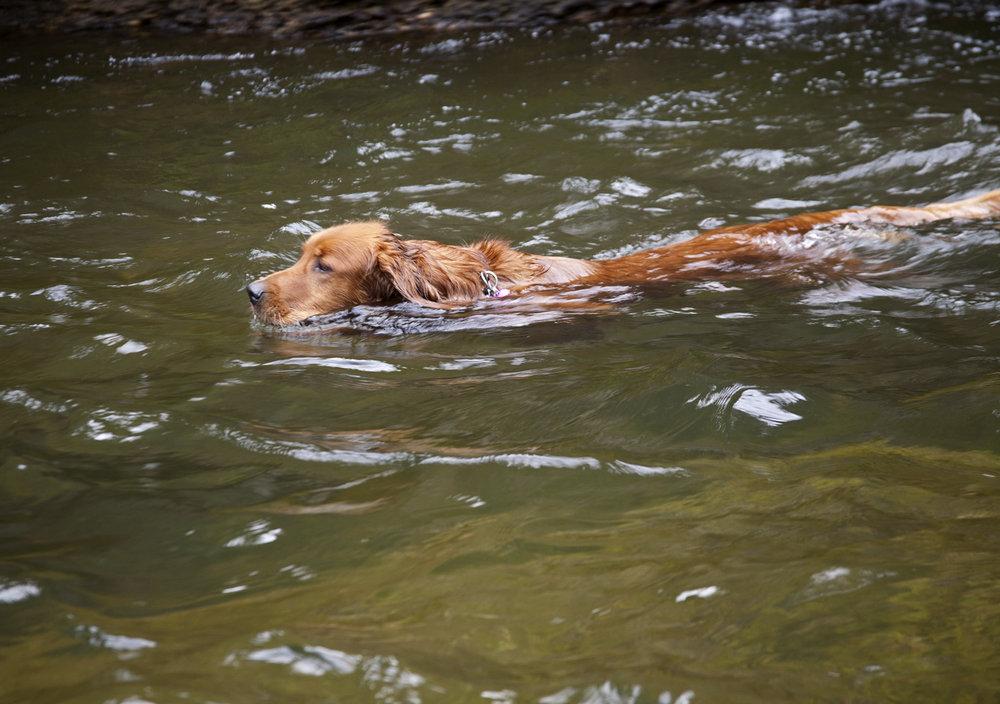 rileyswimming.jpg