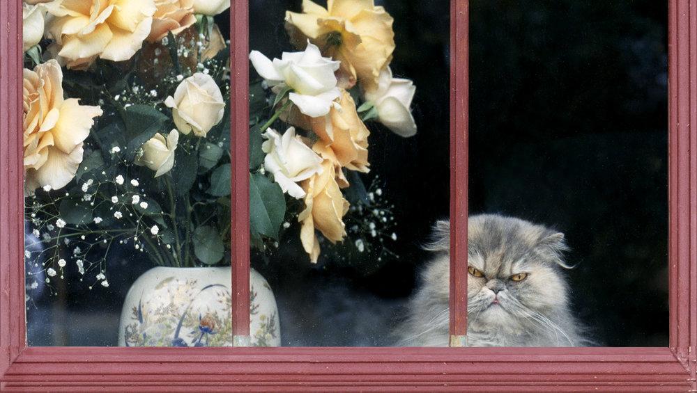 chaton-roses-inwindow.jpg