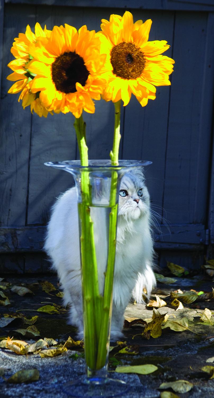 herm-sunflowervase.jpg