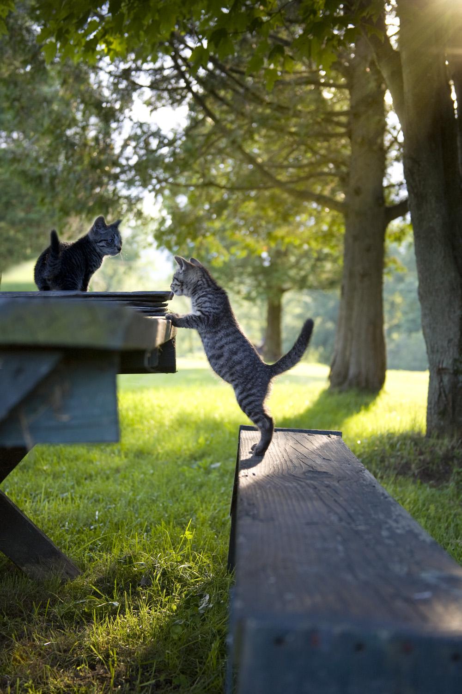 kittensinvermont.jpg