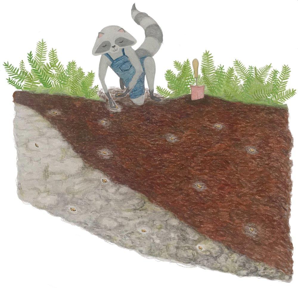 5. Poppy Planting.jpg