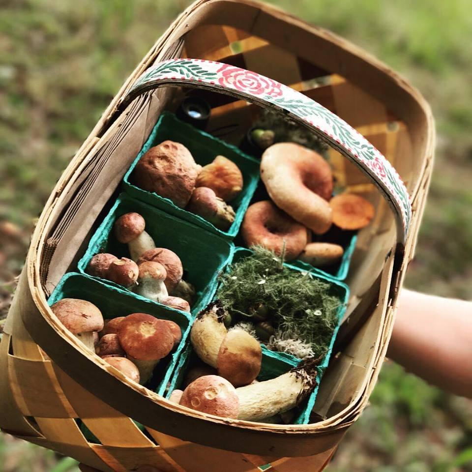 Rocky Bottom Mushrooms