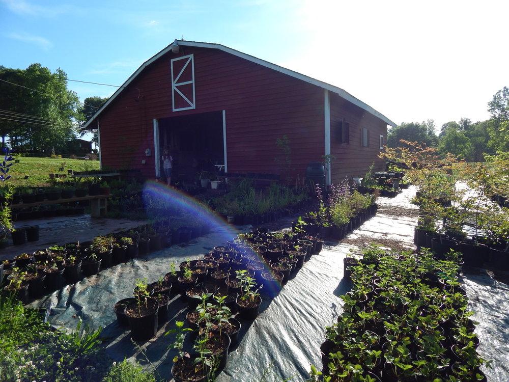 Padula's Plants and Garden Design