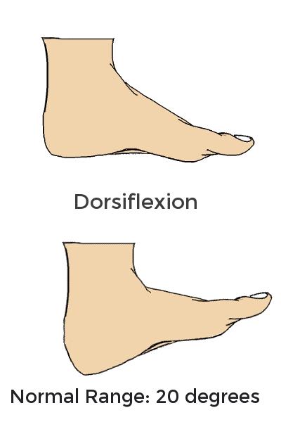 dorsiflexion.png
