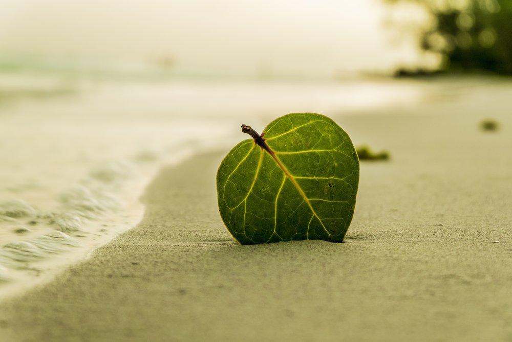 beach-394503.jpg