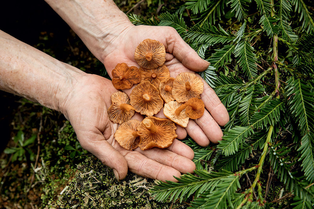 What does Forager mean? - oh...and Foraging!