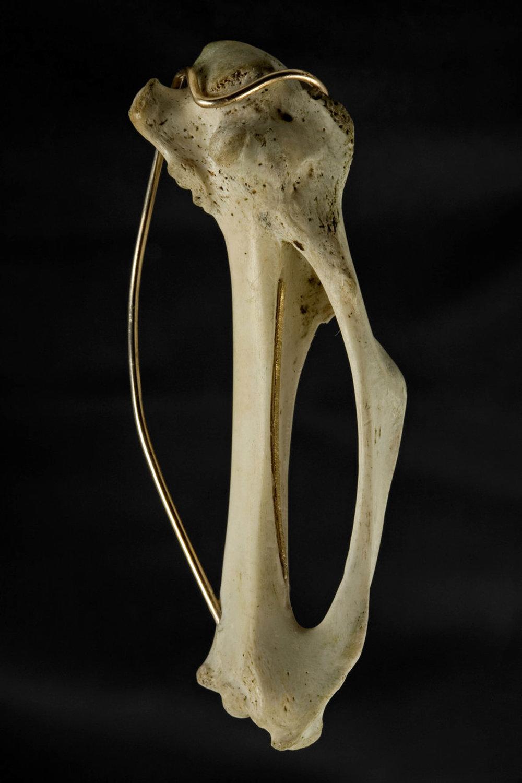 Golden bones