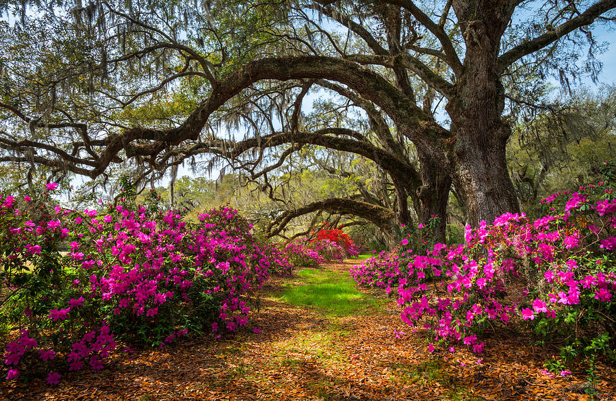 charleston-sc-spring-flowers-scenic-landscape-south-carolina-dave-allen.jpg