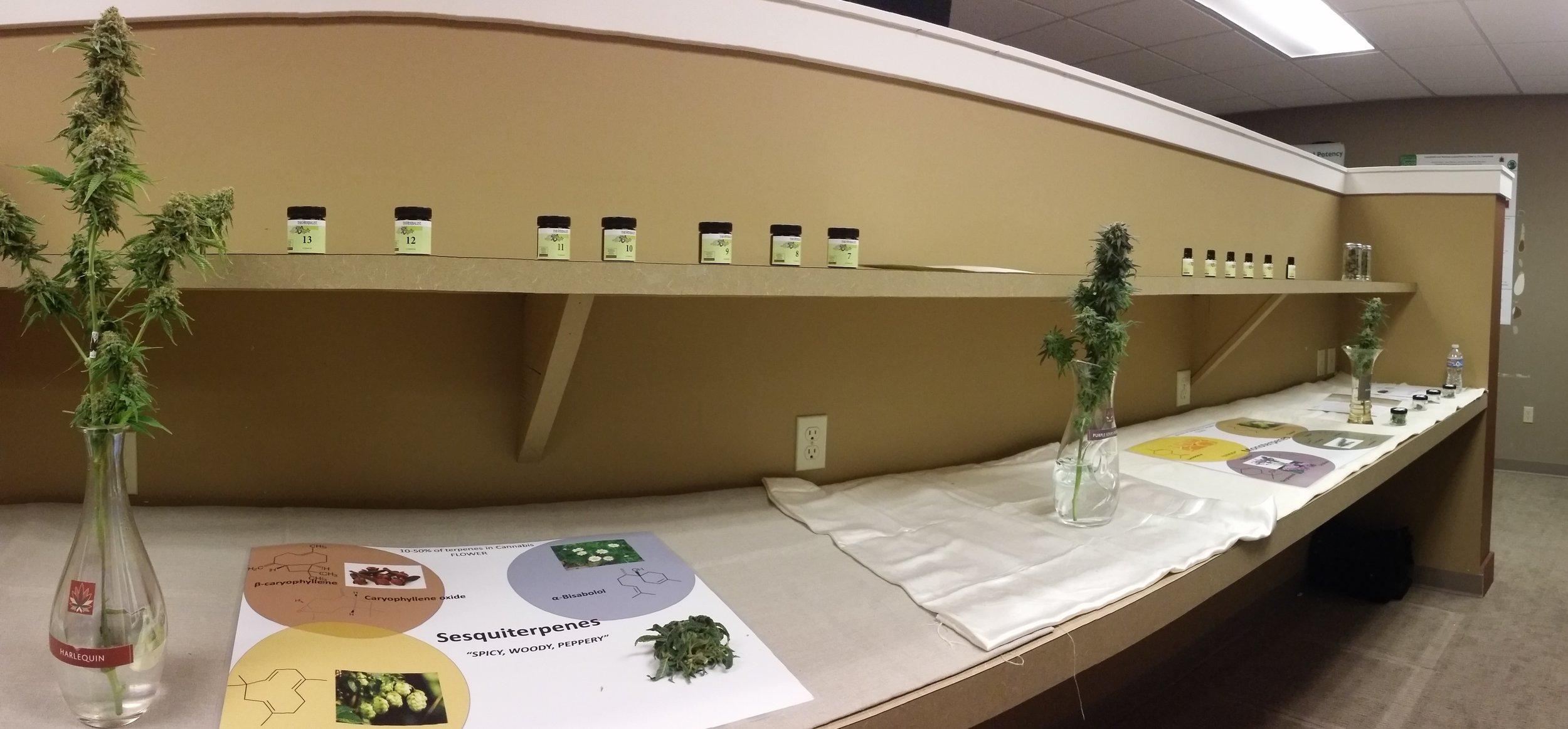 Cannabis Terpene Bar at Terpestival
