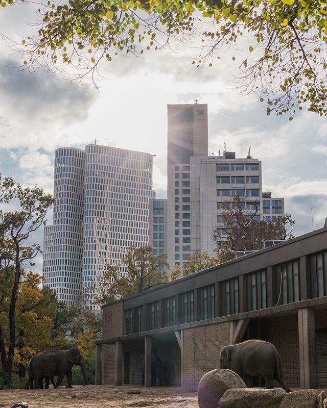Berlin zoo 27/10/18