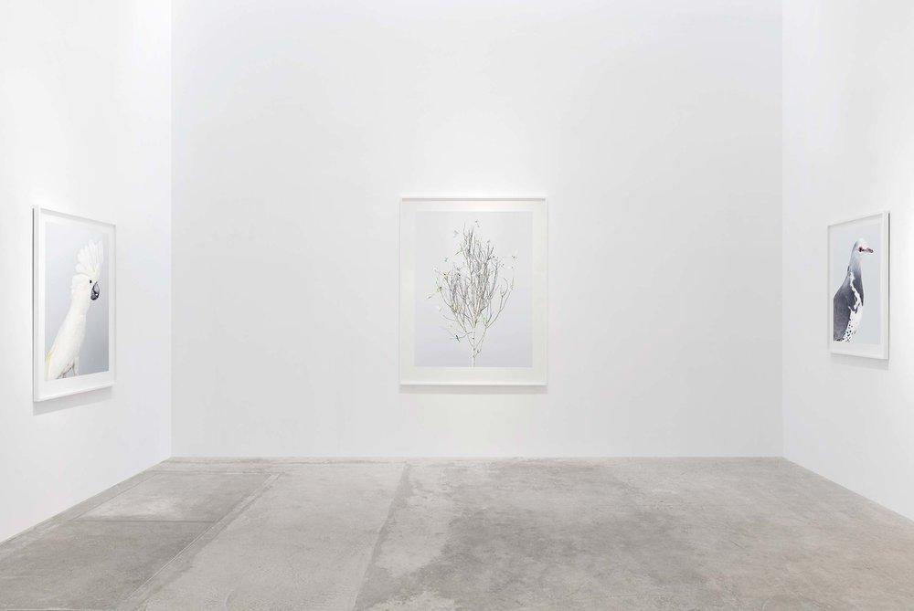 Installation view, Ornithurae, 2017, Olsen Gruin Gallery, New York