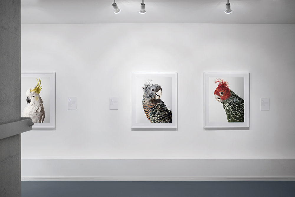 Bird Love, Purdy Hicks Gallery, 2016