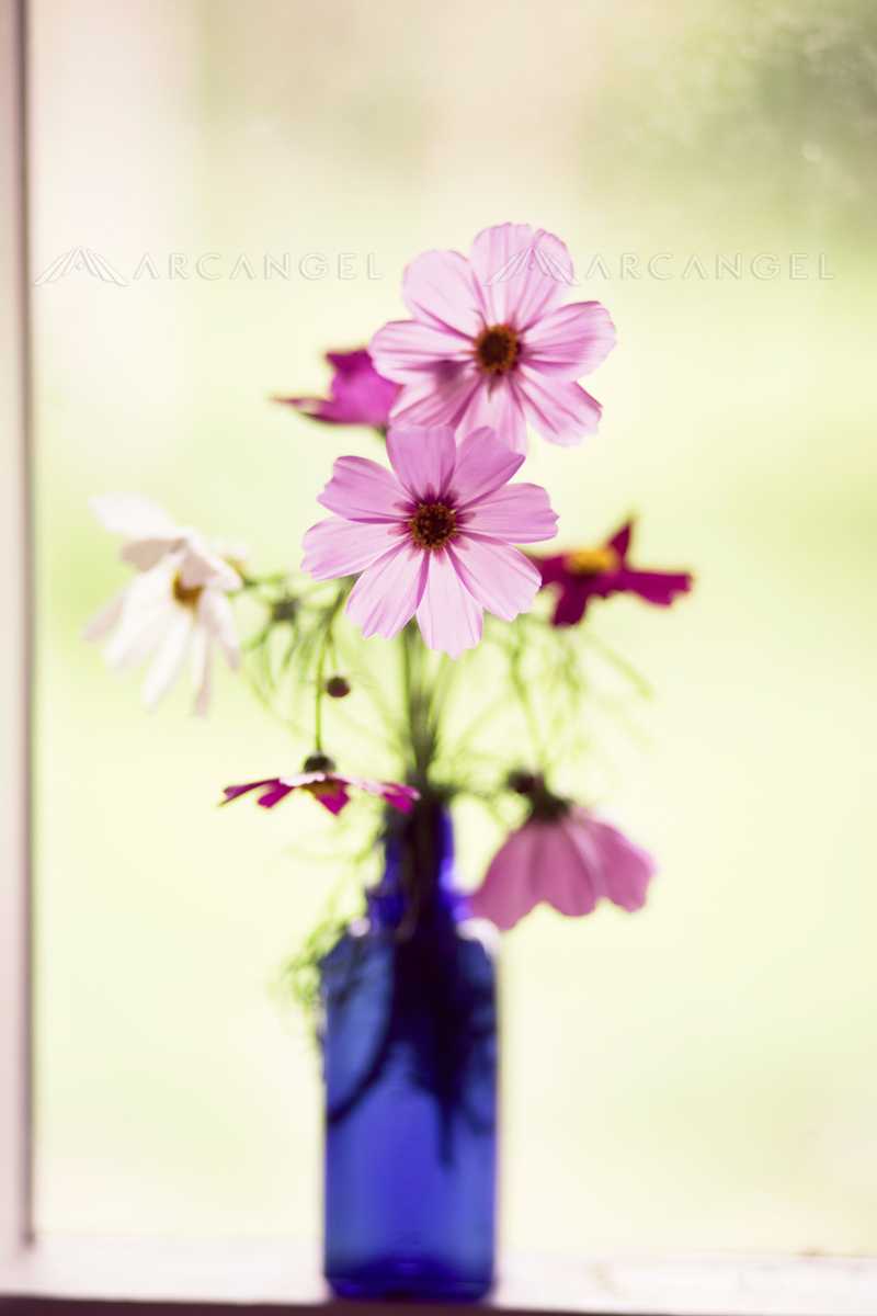 A simple vase of wildflowers on a windowsill could help tell a story very well on a book cover.