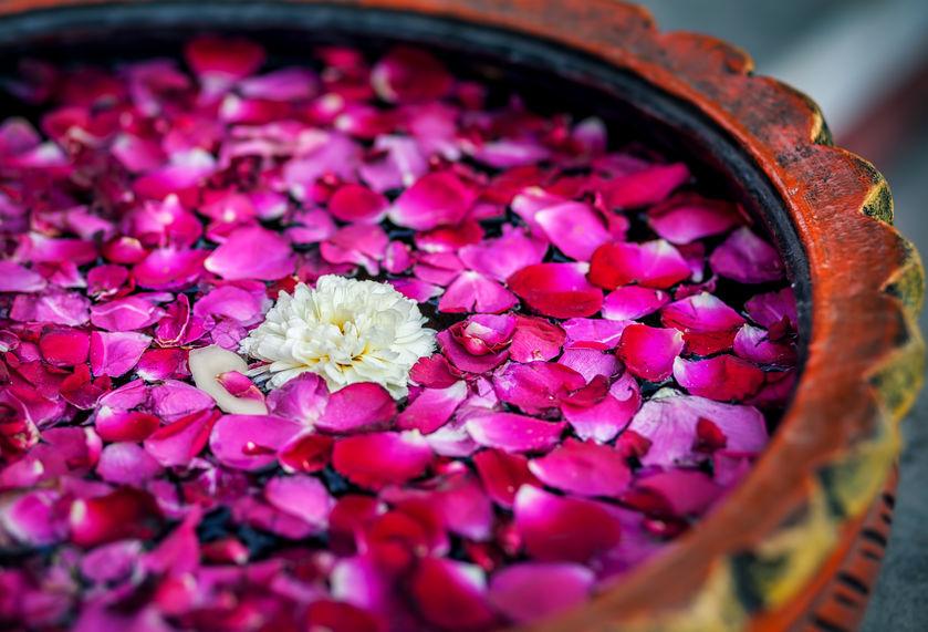 Dhyana Bohnet Celestial Herbalism.jpg