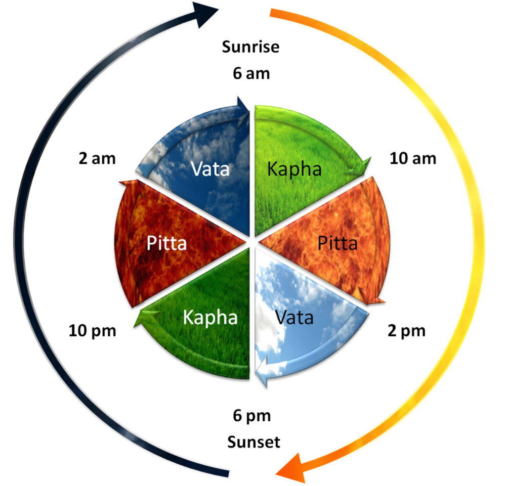 Three_Dosha_Daily_Cycle.png