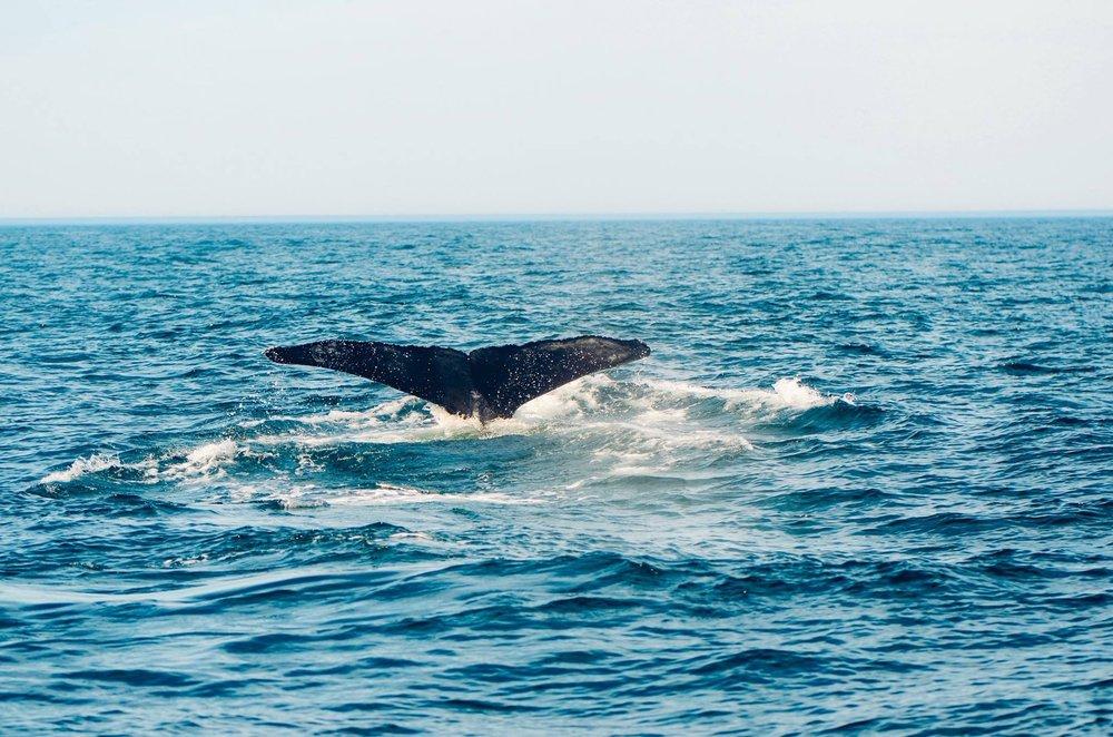 Whale sighting in Grand Manan Island