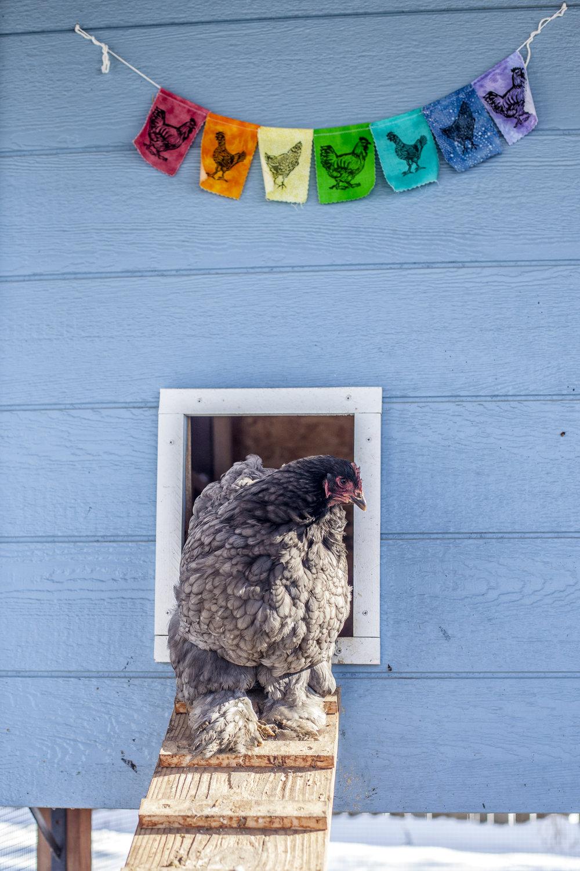 12-100 Bubbles Beast Chicken-1.jpg