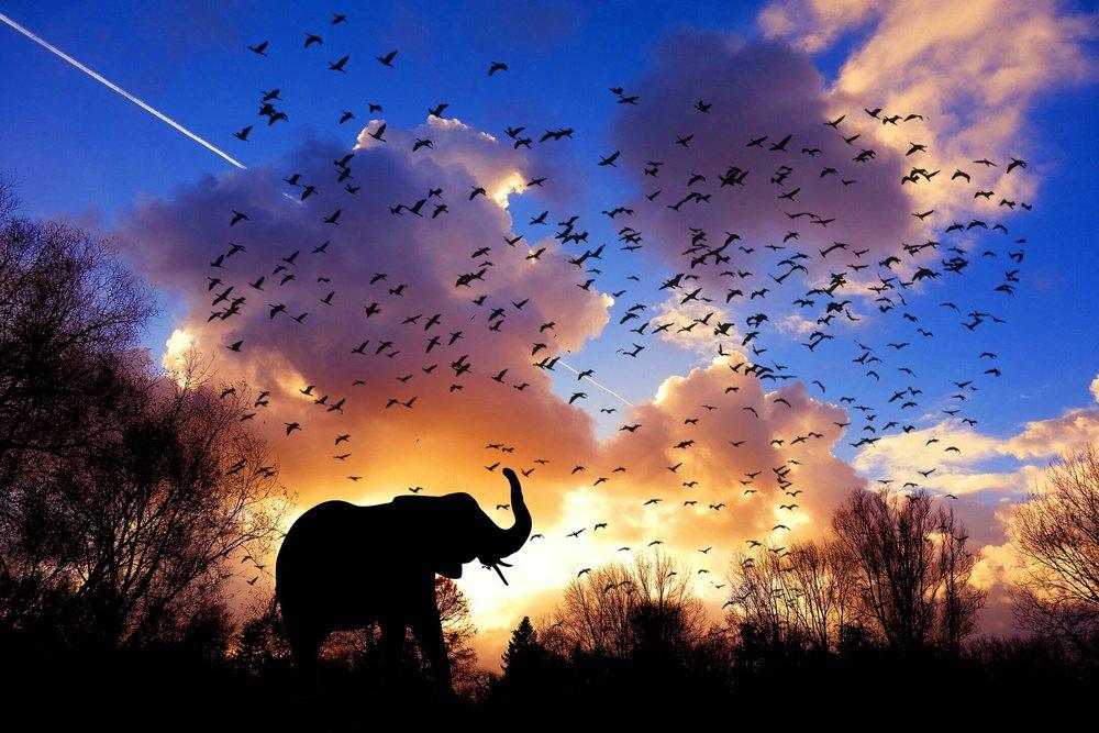 elephant-3117217_1920.jpg