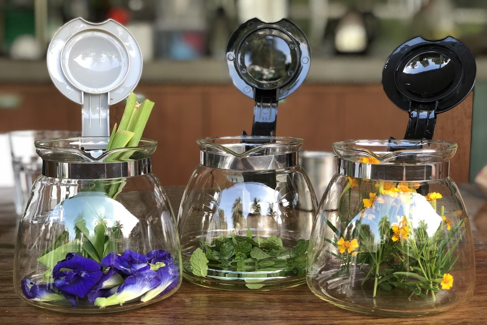 Sprout - Tea Making, Growing to Brewing