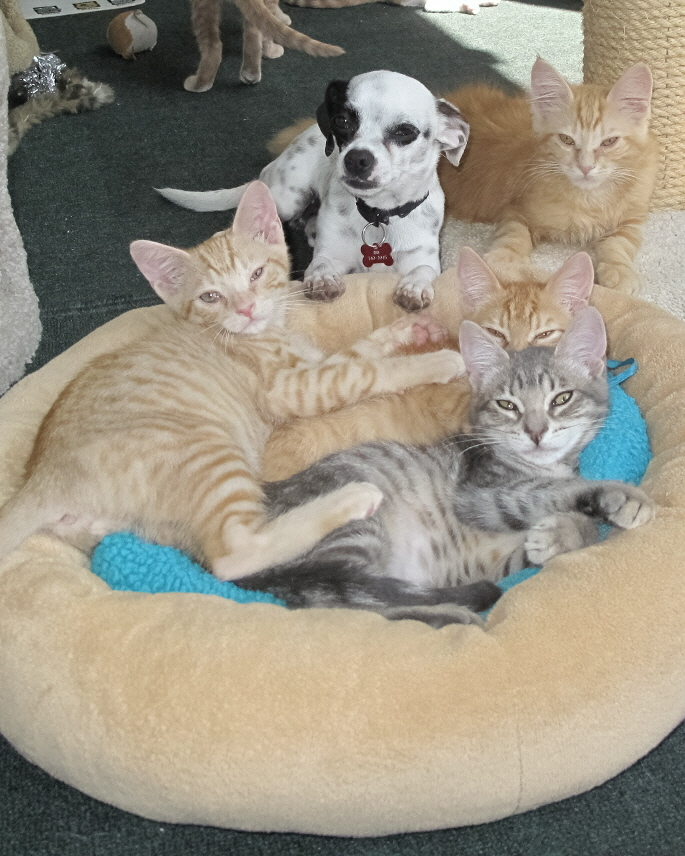 OUR KITTIES LOVE THE PUPS!  -