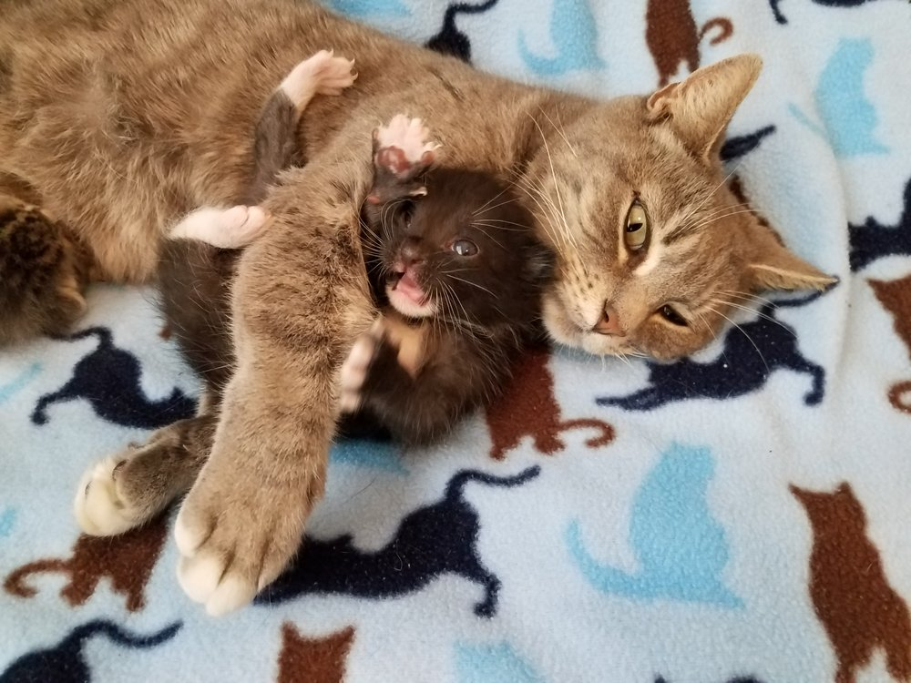Mindy and her baby kitten enjoying a snuggle!