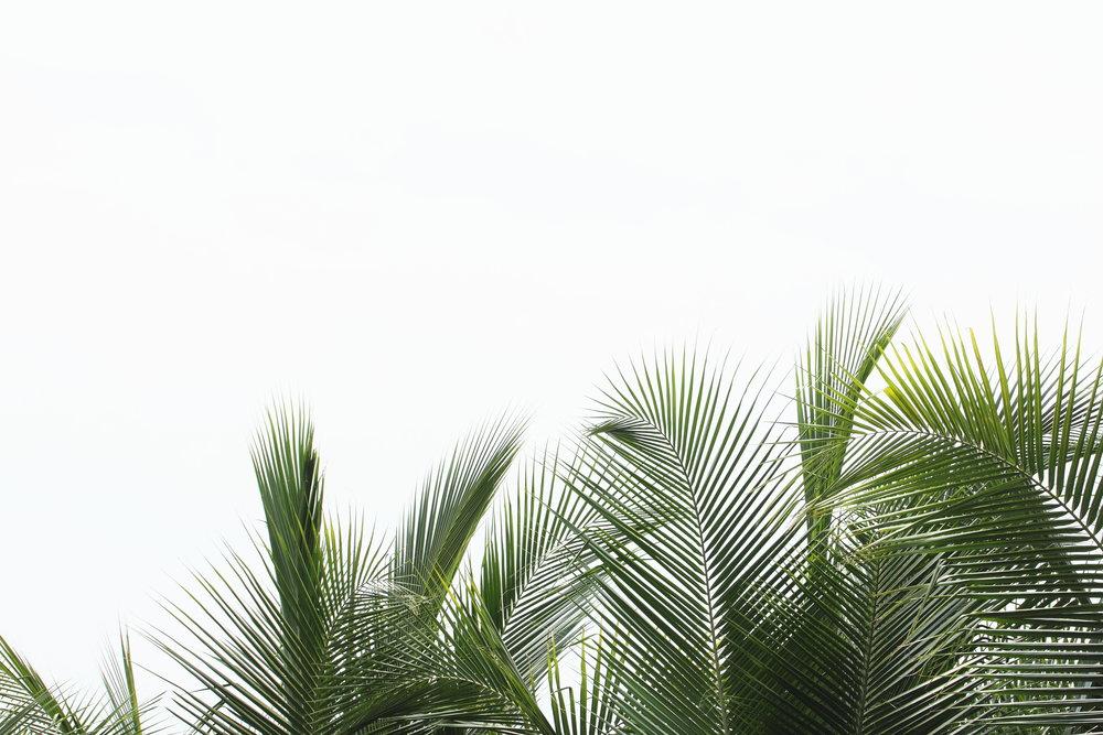 palmfronds.jpg