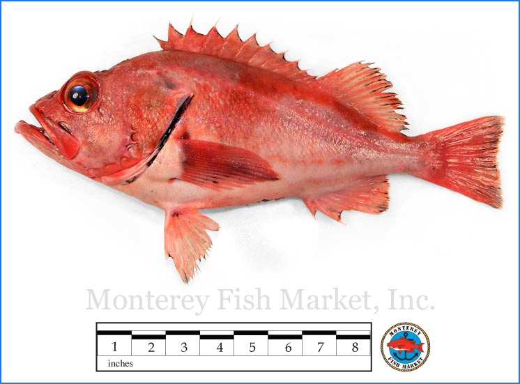Monterey Fish Market Seafood Index photograph of Blackgill Rockfish,  Sebastes melanostomus Sebastes melanostomus