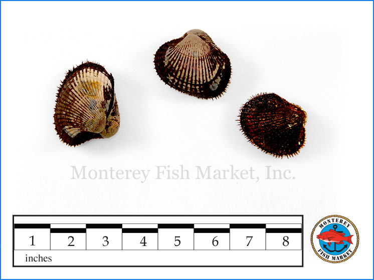 Monterey Fish Market Seafood Index photograph of Blood Clams,  Anadara tuberculosa   / ( Patas de Mula, Concha Negra)