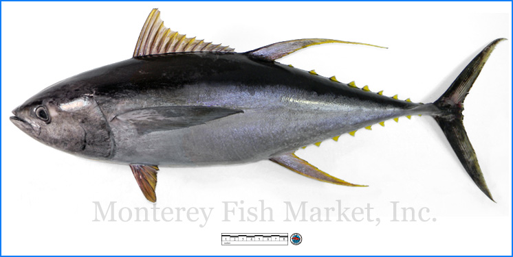 Monterey Fish Market Seafood Index photograph of Yellowfin Tuna,  Thunnus albacares  (Ahi)
