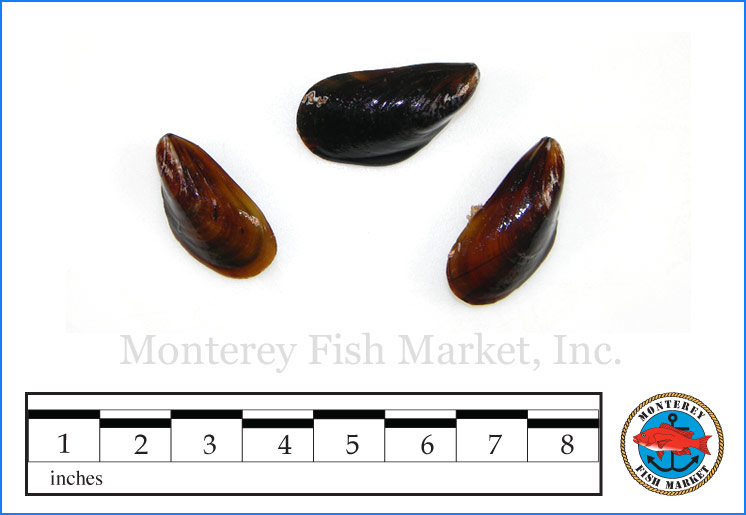 Monterey Fish Market Seafood Index photograph of Mediterranean Mussels,  Mytilus galloprovincialis