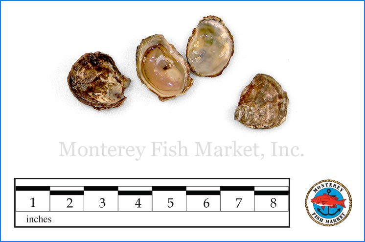 Monterey Fish Market Seafood Index photograph of Olympia Oyster,  Ostrea lurida