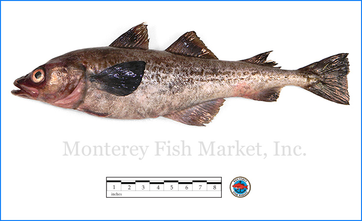 Monterey Fish Market Seafood Index photograph of Alaskan Pollock,  Theragra chalcogramma