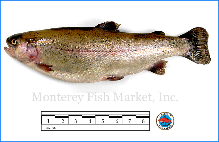 Monterey Fish Market Seafood Index photograph of Rainbow Trout,  Oncorhynchus mykiss