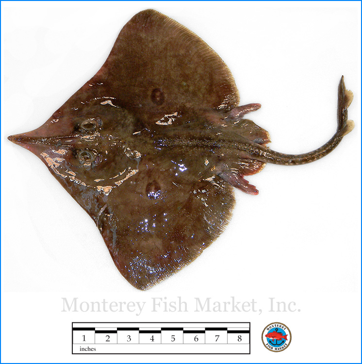 Monterey Fish Market Seafood Index photograph of Longnose Skate,  Raja rhina  (Pacific Skate)