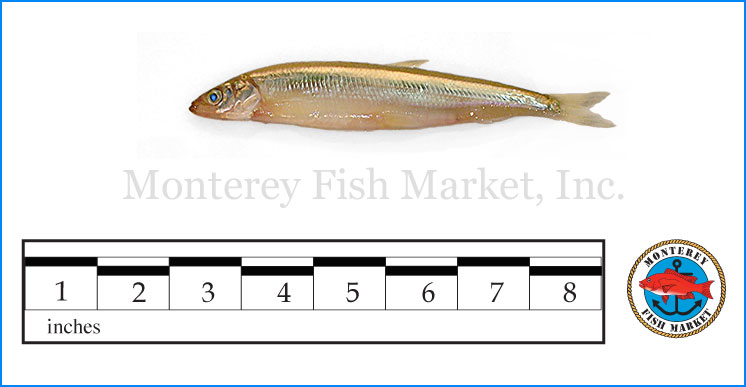Monterey Fish Market Seafood Index photograph of Day Smelt,  Hypomesus pretiosu  s