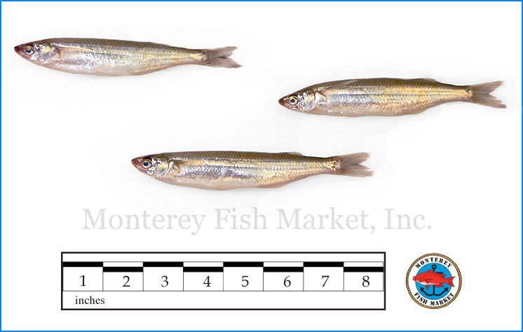 Monterey Fish Market Seafood Index photograph of Night Smelt,  Spirinchus starski  (White Bait)