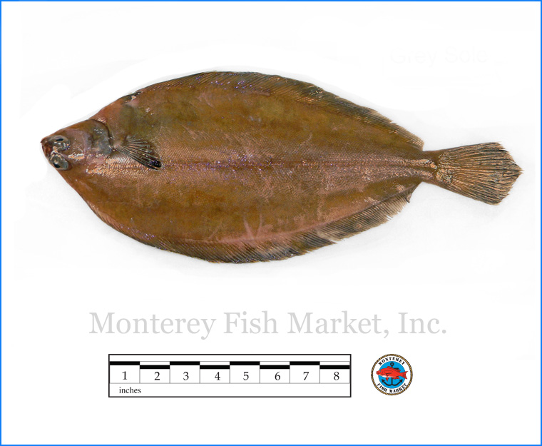 Monterey Fish Market Seafood Index photograph of Grey Sole -  Glyptocephalus cynoglossus  (Witch Flounder)