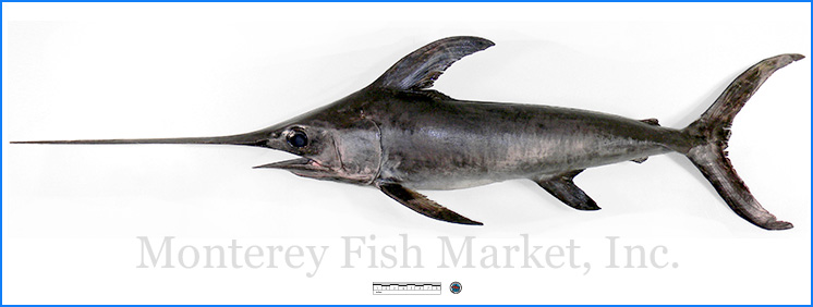 Monterey Fish Market Seafood Index photograph of Swordfish -  Xiphiidae gladius
