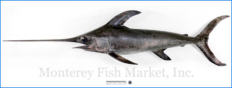 Monterey Fish Market Seafood Index photograph of Swordfish -  Xiphiidae gladius