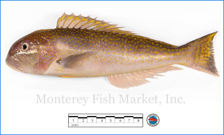 Monterey Fish Market Seafood Index photograph of Tile Fish -  Lopholatilus chamaeleonticeps