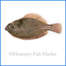 Dab Flounder
