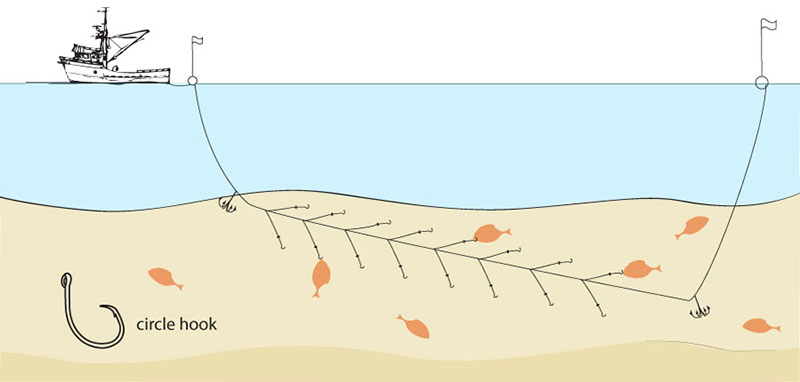 Demersal, or bottom, longlining is a much more environmentally sound means of catching fish like halibut and true cod, which dwell on the ocean floor, than the very destructive alternatives of bottom trawling or dredging. Circle hooks are employed to ameliorate sea turtle deaths.