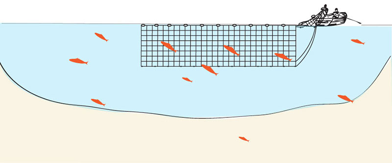 Gillnetting is used in rivers to target specific species such as spawning salmon, and sturgeon.