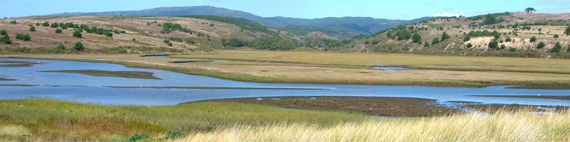A protected Bay Area tidal marsh that is interface between the ocean and both urban and agricultural areas.